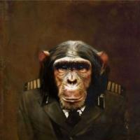http://www.pabloga.com/es/files/gimgs/th-5_5_chimpance.jpg