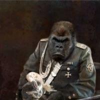 http://www.pabloga.com/es/files/gimgs/th-5_5_gorila.jpg